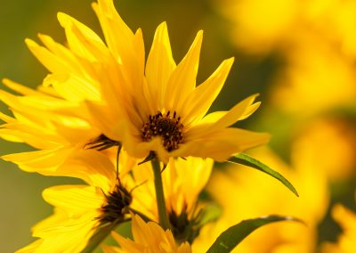 Botanical Medicine in Clinical Care