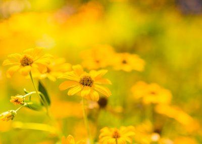 Botanical Medicine For Primary Care