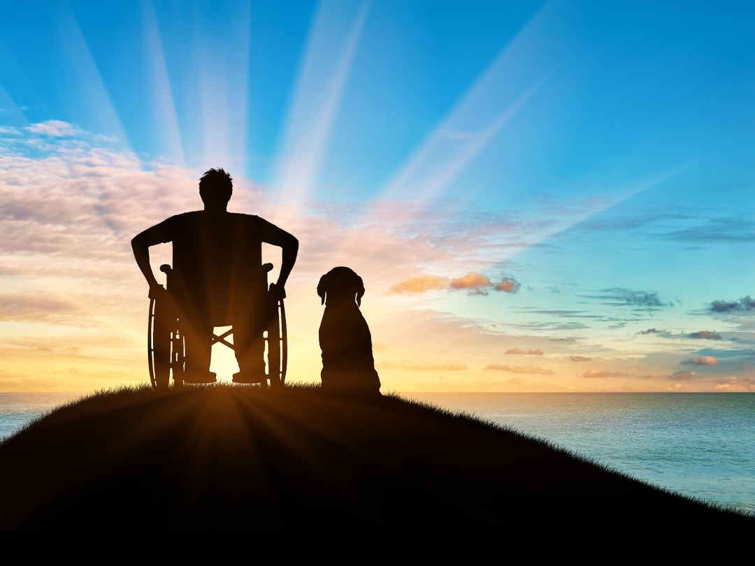 image person in wheelchair with dog