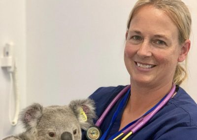 SVM Episode 18: Koala Rehab with Dr. Kristin Doust