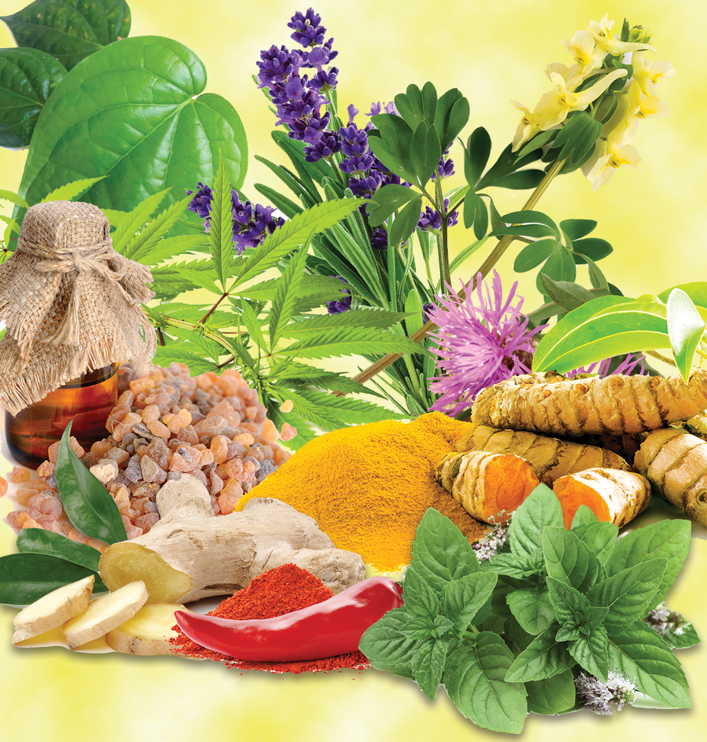 Botanical_Day _Thumbnail_2019_v01