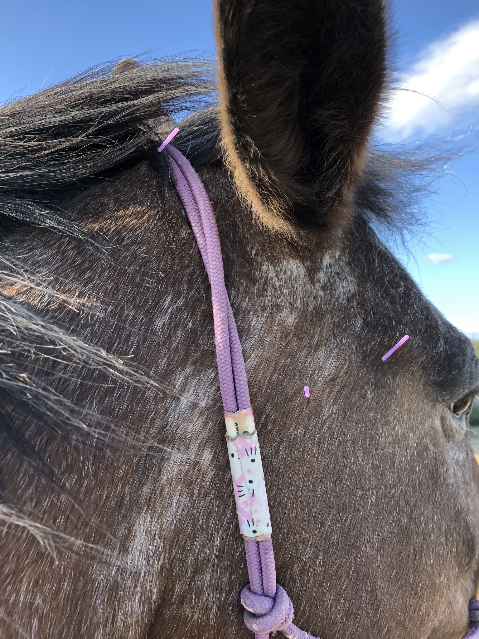 Muscle Imbalance and Pain in a 12 Year Old Quarter Horse