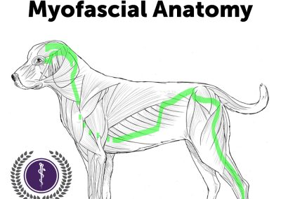 C.A.T. Episode 8. Medical Acupuncture Myofascial Anatomy