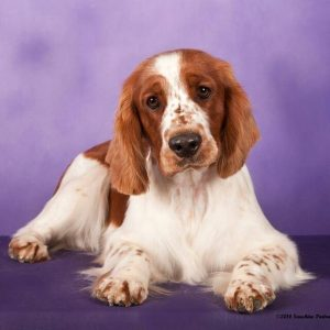 Image of Sammy