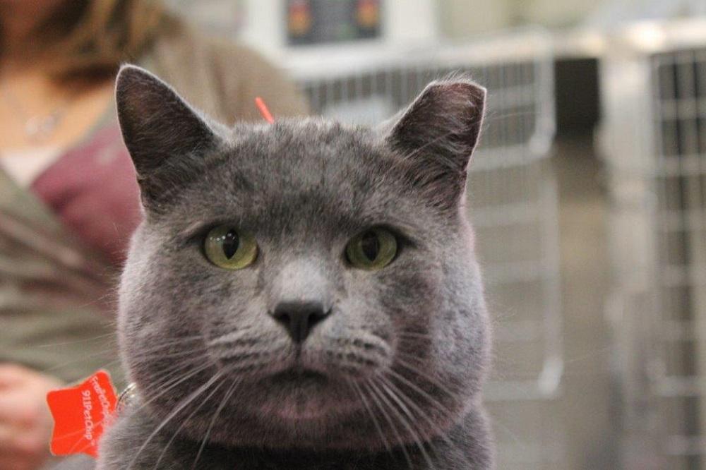 Union Pet Hospital – Leah Miller, DVM, cVMA