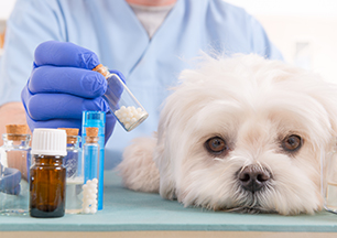 9.2.2020 Homeopathy for Animals — Cure or Con?