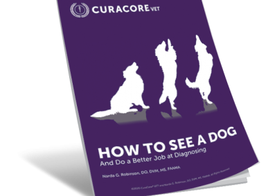 SVM Episode 10: How to See a Dog