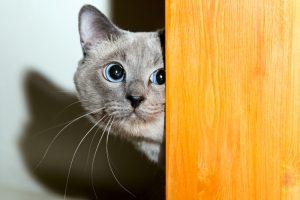 Scared Cat Hiding