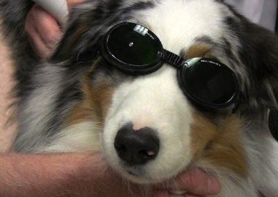 slider-Laser-Dog