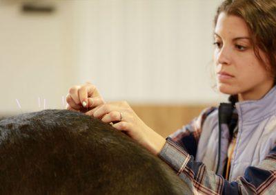 student performing equine acupuncture