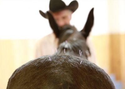 acupuncture needles on horse rump