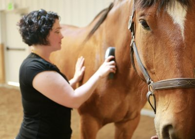 equine medical massage