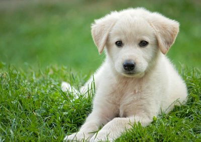 cute puppy integrative medicine
