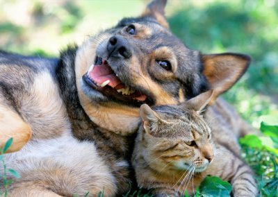 happy dog and cat friends