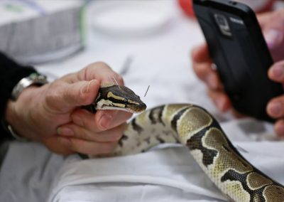snake acupuncture