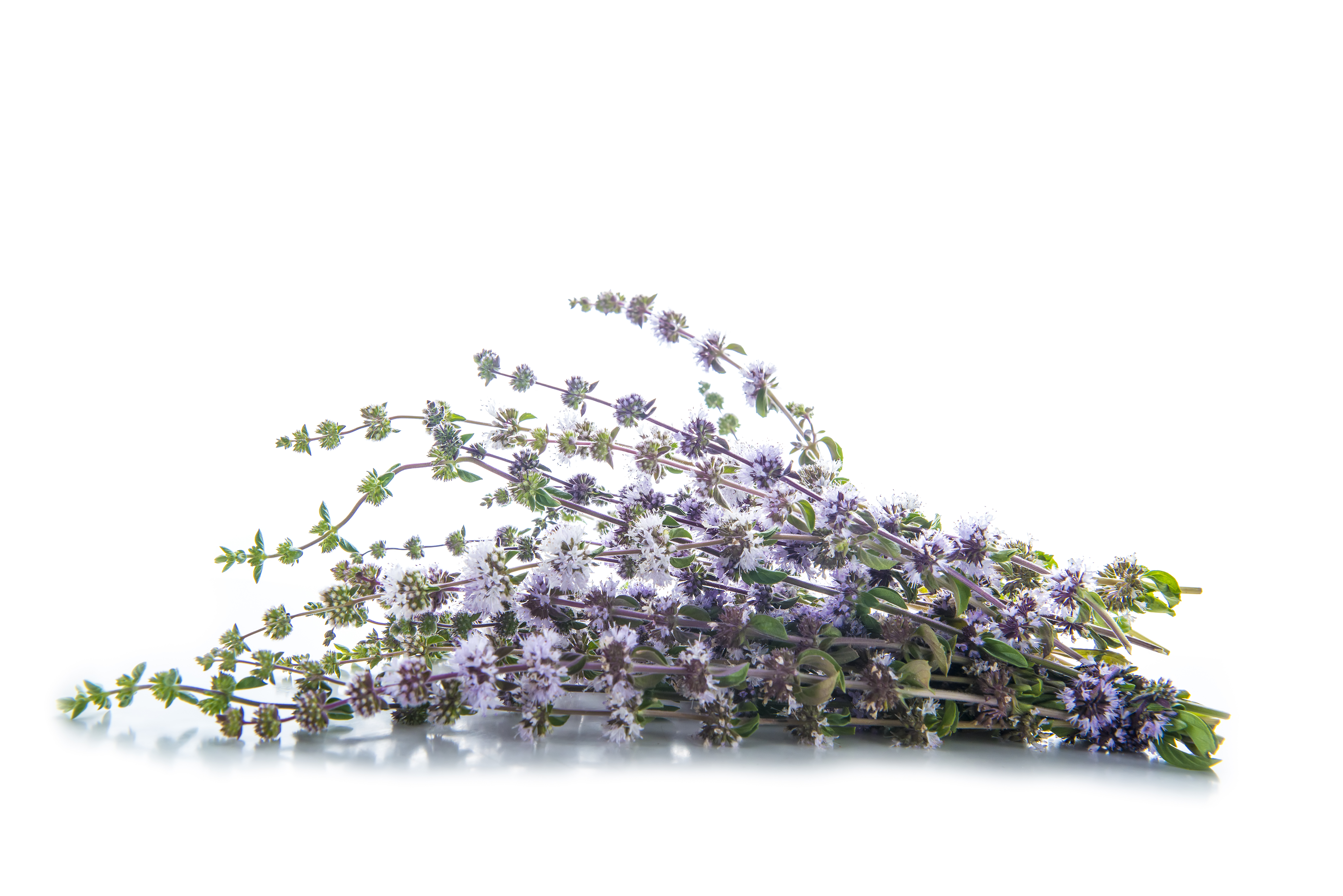 Pennyroyal in My Cat's