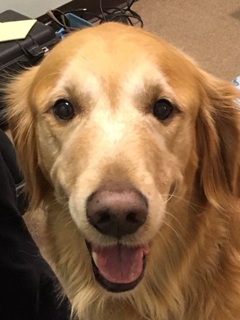 Canine Hip Dysplasia and Lumbosacral Disease in a 6 Year Old Golden Retriever