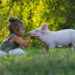 girl caring for a friend (pig)