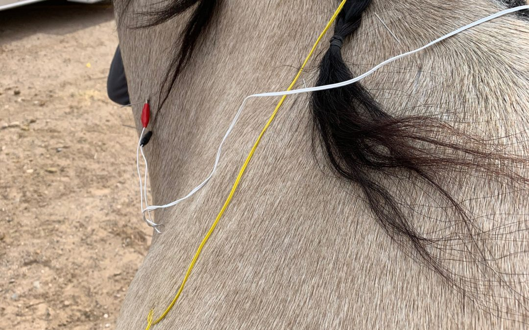 Muscle Soreness and Possible Osteoarthritis in a 12 Year Old Quarter Horse